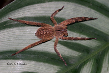 biologia das aranhas