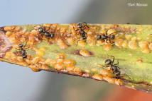 formigas - métodos de controle